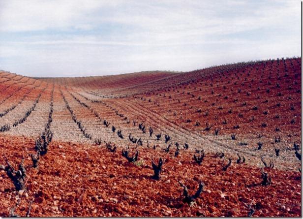 Viñedos-Cariñena