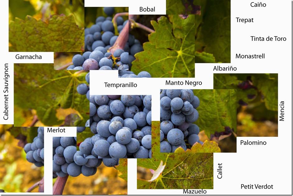 uva descompuesta y rotulos