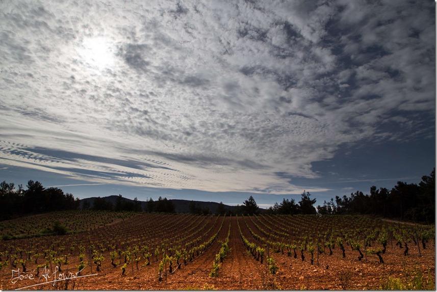 viñedo nube